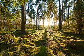EU scientists see the forest for the trees (EU-Forest)   EU Science Hub